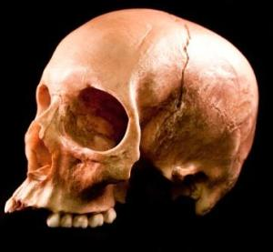 skulls-600-7