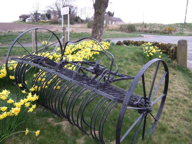 Image shows a traditional mechanical hay rake parked at a junction between two roads. Daffodils grow along the field boudary and through the tines of the machine.