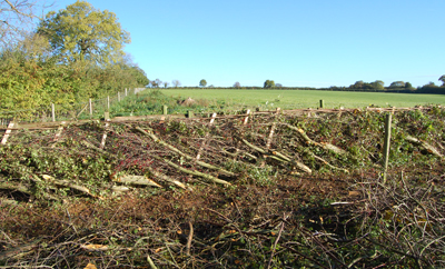 Image shows a newly layed hedge with a tangle of branches in the foreground and a rising gereen meadow behind.